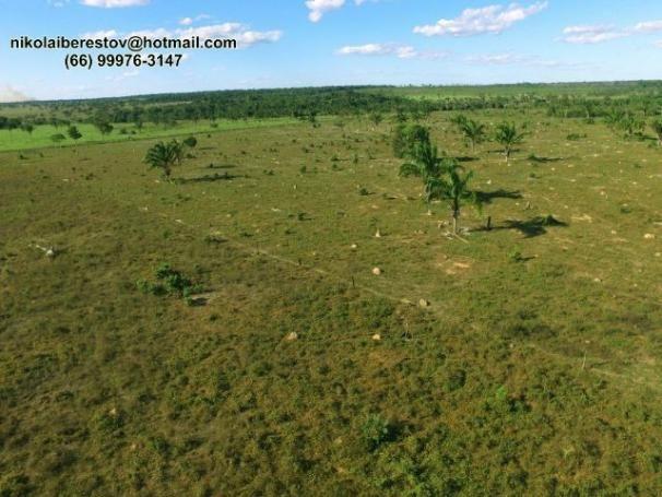 Fazenda 90 hectares nordeste mt nikolaiimoveis