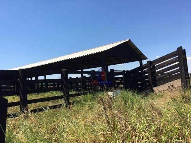 Fazenda na beira da BR 364 próximo à Cacoal - Foto 14
