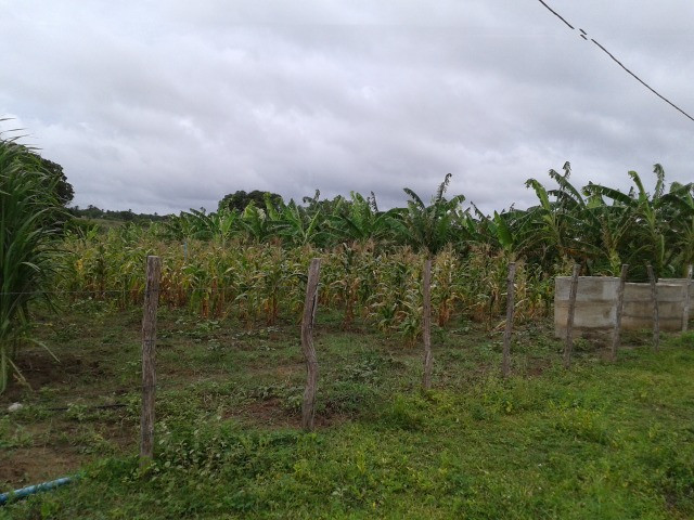 Fazenda em monte alegre, 30 há. duas casas, poço, curral, rio, galpão - Foto 11