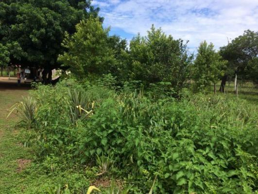 Chácaras com entrada + parcelas de 2 hec a 20 km de Cuiabá, na comunidade de São Jerônimo