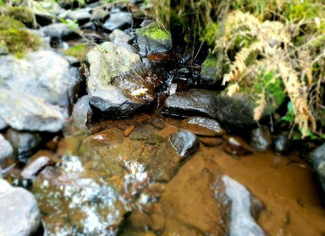 Sítio 14 hectares em Urupema com Cachoeira - Foto 5