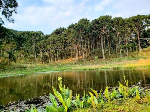 Sítio 14 hectares em Urupema com Cachoeira - Foto 12