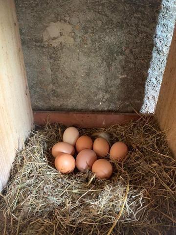 Ovos de galinhas caipiras