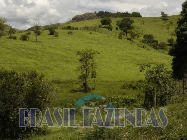 Fazenda em Itamaraju. Jucuruçu - Foto 2