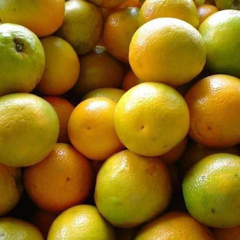 Vende-se laranja