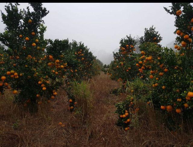 Custeio rural sem fiadores - Foto 4