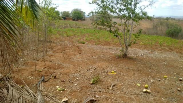 Ótima propriedade de 7.5 hectares, próximo a Lagoa de Itaenga-PE - Foto 4