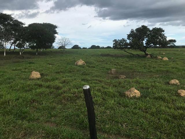 Fazenda 354 hectares, Município de Livramento/MT - Foto 3