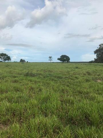 Fazenda 354 hectares, Município de Livramento/MT - Foto 2