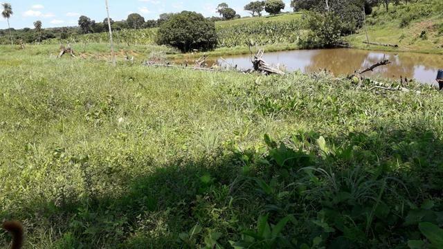 Chácara no município de Cariri do Tocantins - Foto 7