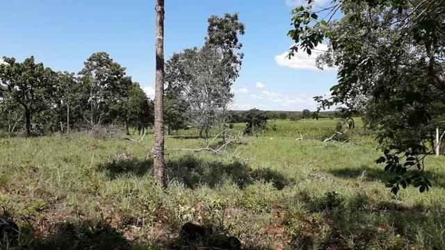 Chácara no município de Cariri do Tocantins - Foto 8