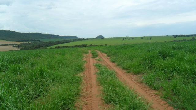 Fazenda de 67 alqueires para lavoura a venda na região de Paraúna GO - Foto 7