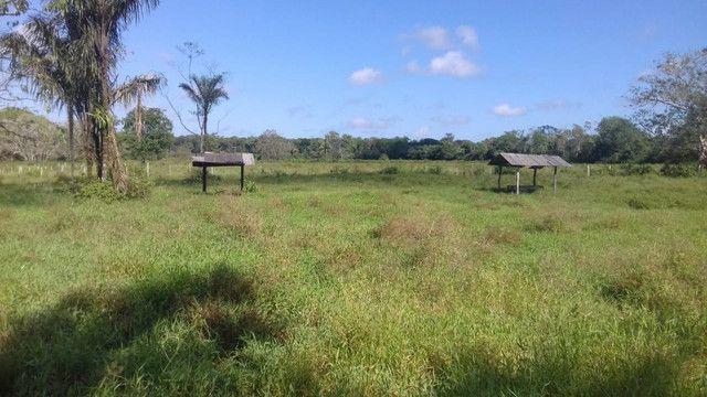 Sítio no Pará,20 hectares com pasto, curral, casa ,igarape por 250 mil reais - Foto 7