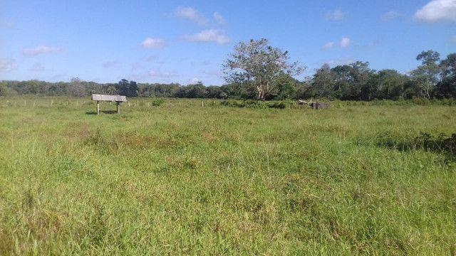 Sítio no Pará,20 hectares com pasto, curral, casa ,igarape por 250 mil reais - Foto 12