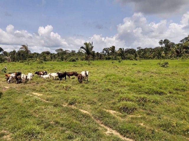 Área de 250 hectares sendo 130 formado