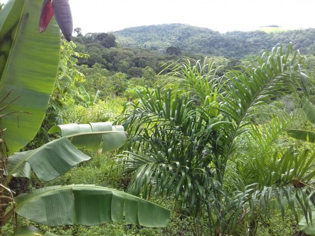 Fazenda Marau/Ubaitaba - Foto 18