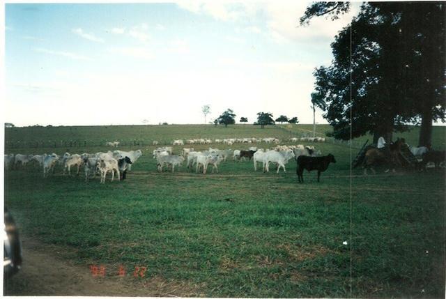 Vendo fazenda de Pecuária com 1.720 hectáres - Foto 8