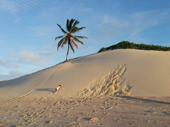 Vendo Área na beira mar da Praia de Pititinga - Foto 8