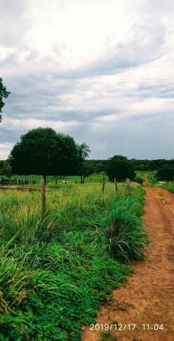 Chácara no município de Cariri do Tocantins - Foto 12