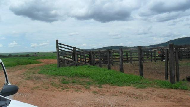 Fazenda de 67 alqueires para lavoura a venda na região de Paraúna GO - Foto 11
