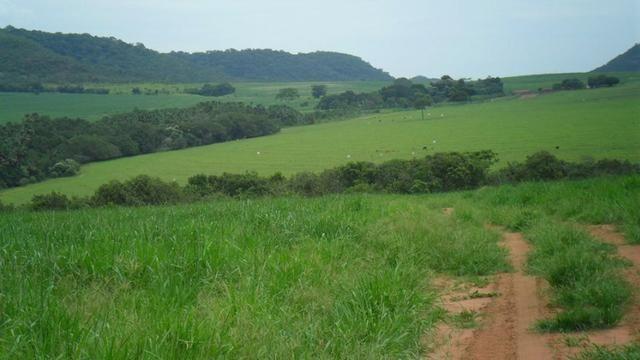 Fazenda de 67 alqueires para lavoura a venda na região de Paraúna GO - Foto 6
