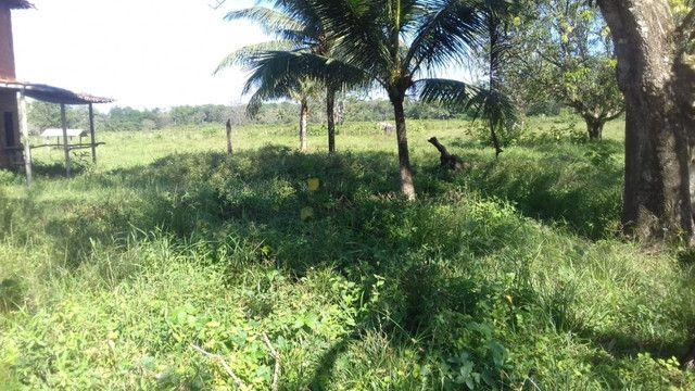 Sítio no Pará,20 hectares com pasto, curral, casa ,igarape por 250 mil reais - Foto 14