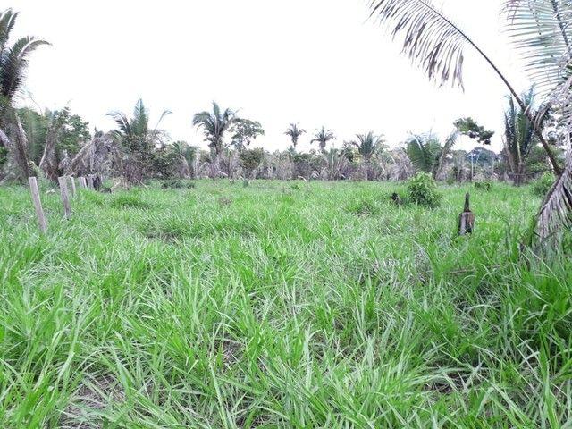 Área de 250 hectares sendo 130 formado  - Foto 6