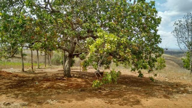 Ótima propriedade de 7.5 hectares, próximo a Lagoa de Itaenga-PE - Foto 6