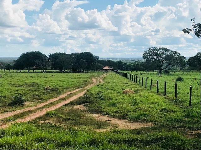 Fazenda 354 hectares, Município de Livramento/MT - Foto 8