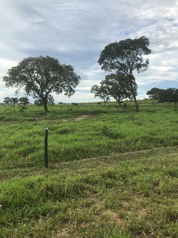 Fazenda 354 hectares, Município de Livramento/MT - Foto 6