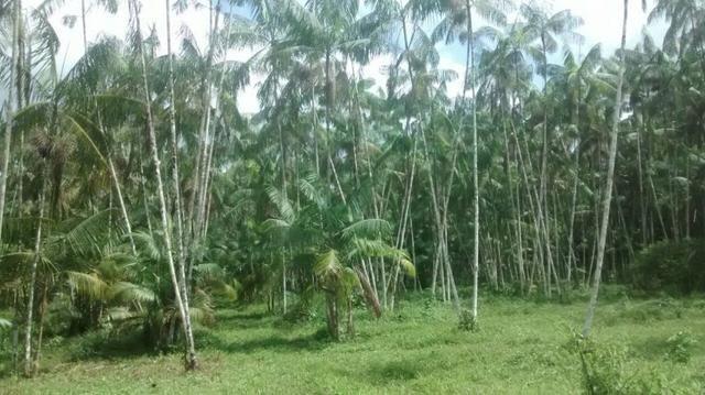 50 hectares a 50 km de Castanhal por 350 mil reais zap *
