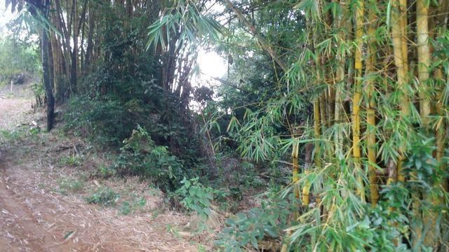 Vende-se Bambu - Foto 2