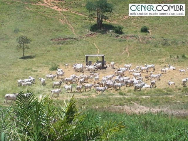 1010/Extraordinária fazenda de 5.199 ha para pecuária - Foto 13