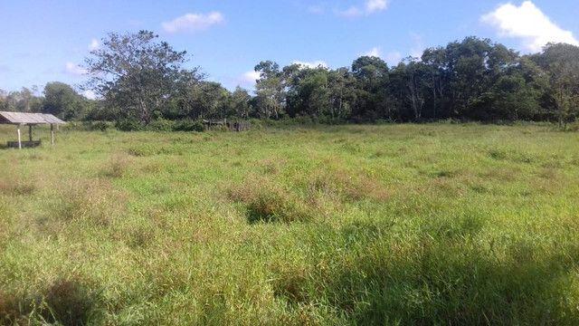 Sítio no Pará,20 hectares com pasto, curral, casa ,igarape por 250 mil reais - Foto 5