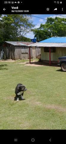 Chácara 3,17 ha -185 mil c/casa Santana do Livramento Rs - Foto 9