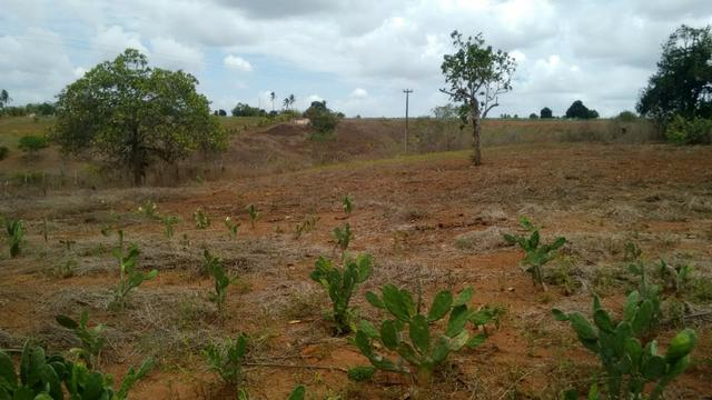 Ótima propriedade de 7.5 hectares, próximo a Lagoa de Itaenga-PE - Foto 10