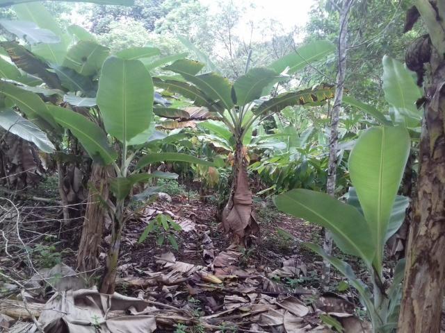 Fazenda Marau/Ubaitaba