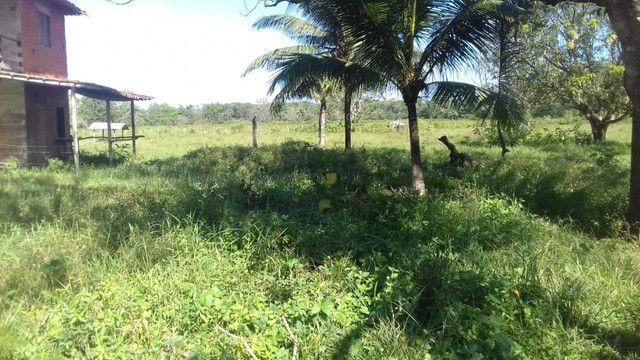 Sítio no Pará,20 hectares com pasto, curral, casa ,igarape por 250 mil reais - Foto 15