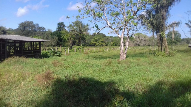 Sítio no Pará,20 hectares com pasto, curral, casa ,igarape por 250 mil reais - Foto 13