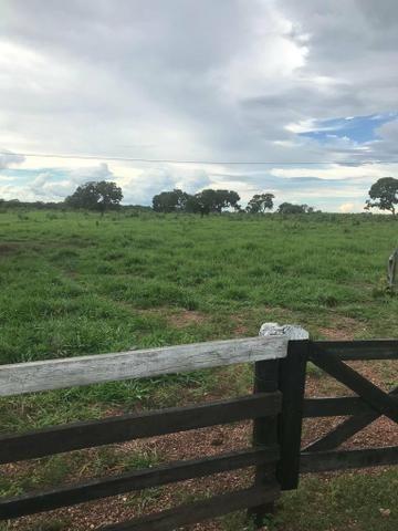 Fazenda 354 hectares, Município de Livramento/MT - Foto 4