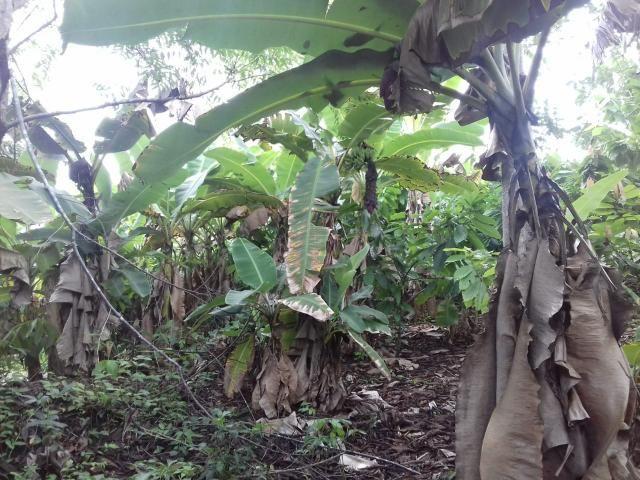 Fazenda Marau/Ubaitaba - Foto 6