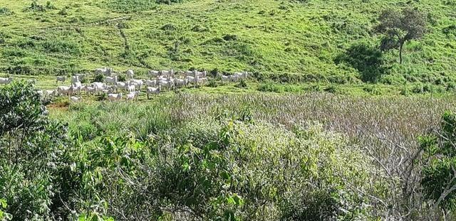 1010/Extraordinária fazenda de 5.199 ha para pecuária - Foto 2