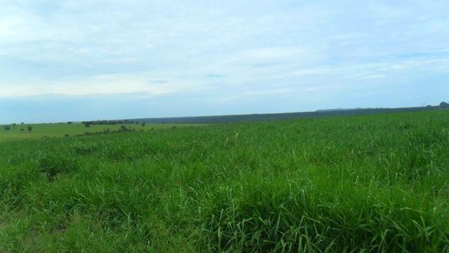 Fazenda de 67 alqueires para lavoura a venda na região de Paraúna GO - Foto 8