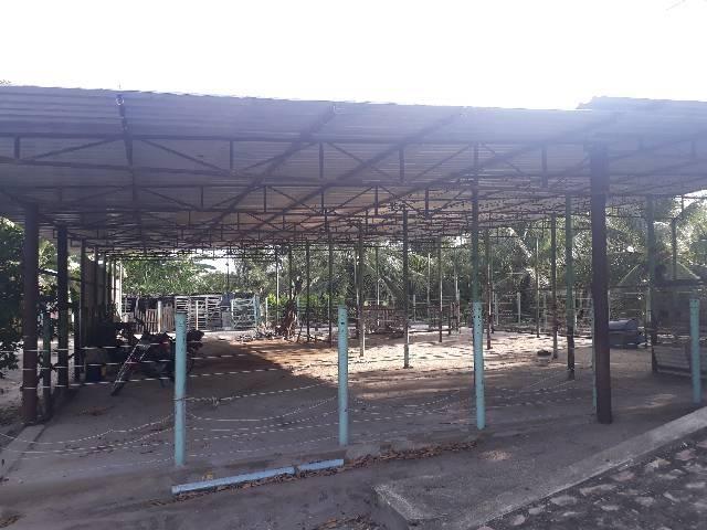 FAZENDA DE COQUEIROS COM EXCELENTE PRODUÇÃO MENSAL ARENA - Foto 11