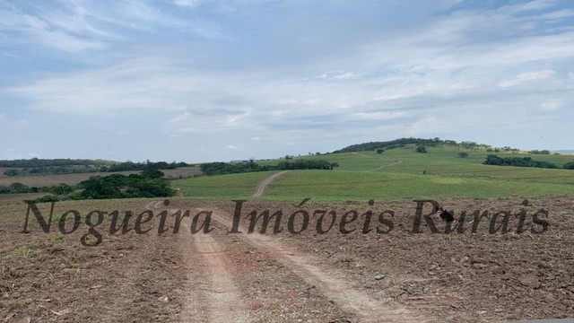 Fazenda com 72 alqueires na região de Itapetininga (Nogueira Imóveis Rurais) - Foto 16