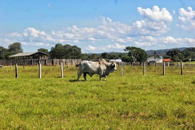 Fazenda a venda no Mato Grosso doo Sul-Corumbá - Foto 5