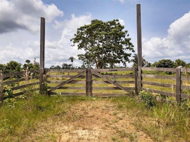 Área de 250 hectares sendo 130 formado  - Foto 4