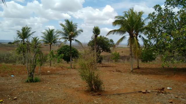 Ótima propriedade de 7.5 hectares, próximo a Lagoa de Itaenga-PE - Foto 5