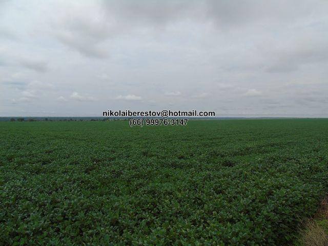 Fazenda arrenda 2.000 hectares para lavoura nordeste mt