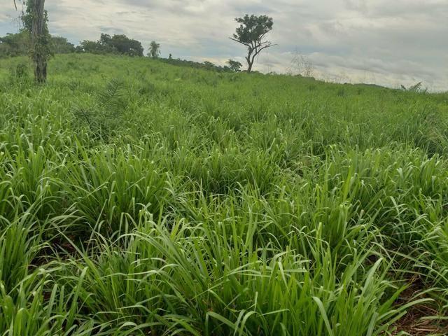 Fazenda em Itamaraju. 5 mil hectares